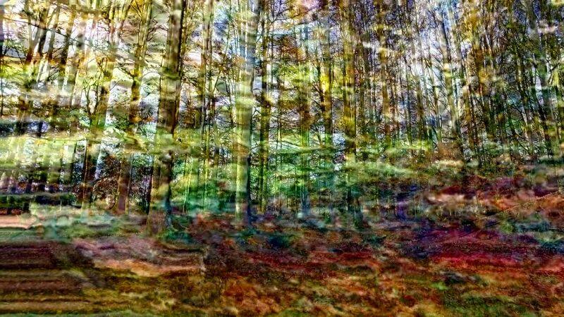 Jacques Perconte, Bois de la belle goutte , 2017 ©DR