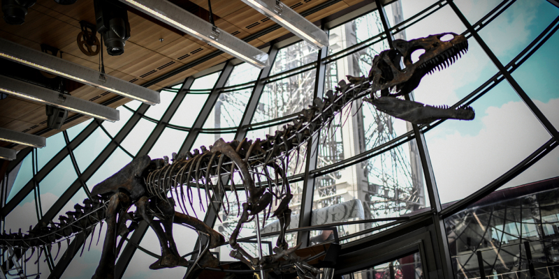 A picture taken on June 2, 2018 shows a skeleton of an undeterminate carnivorous dinosaur on display at the first floor of the Eiffel Tower in Paris.  The 9-metre-long, 2,5-metre-high skeleton was found in Wyoming, USA, in 2013 and is some 150 Million years old. This utterly unique object of a completely unknown Theropod, will go on auction on June 4, 2018 during an exhibition held by Aguttes auction house on the first floor of the Eiffel tower. / AFP PHOTO / STEPHANE DE SAKUTIN