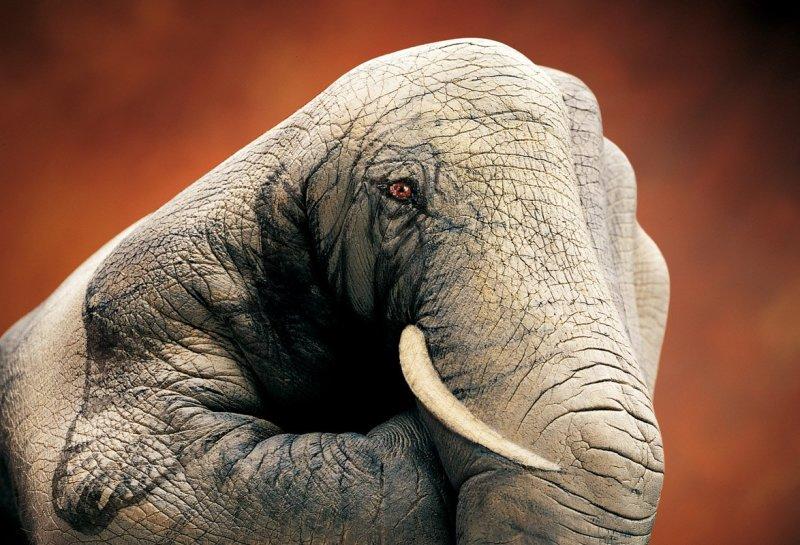 phoca_thumb_l_Elephant on brown