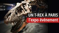 T-Rex, Muséum National d'Histoire Naturelle