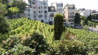 Vendanges - Mairie18