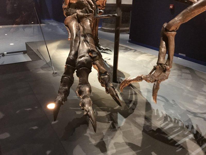 Vue de l'exposition Un T-Rex à Paris - Muséum National d'Histoire Naturelle