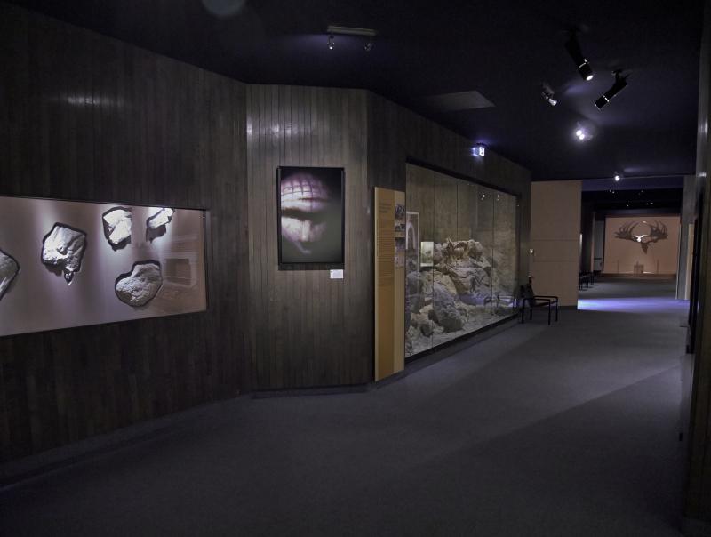 Vue des collections permanentes - Musée national d'archéologie, Saint Germain en Laye (7)