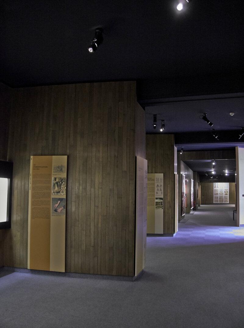 Vue des collections permanentes - Musée national d'archéologie, Saint Germain en Laye (9)