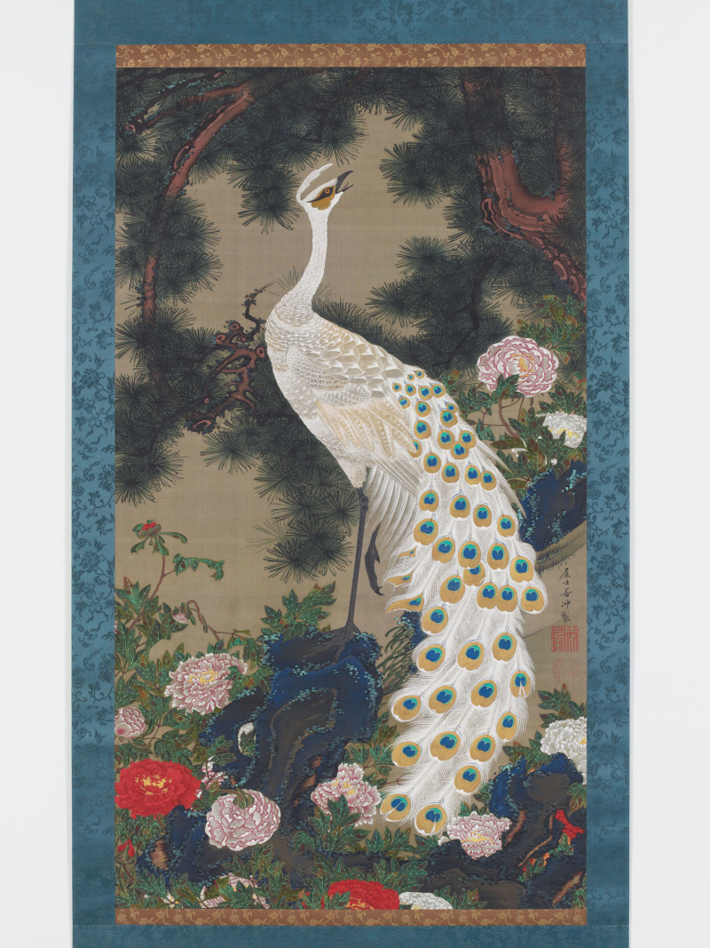 White peacock and peonies under a pine