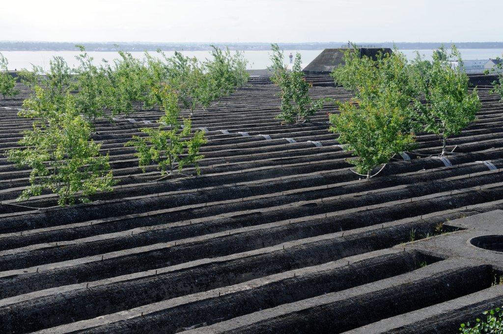 Gilles Clément, Le Jardin du Tiers-Paysage – Le Bois des Trembles, Toit de la base des sous marins, Saint-Nazaire, création pérenne Estuaire 2009