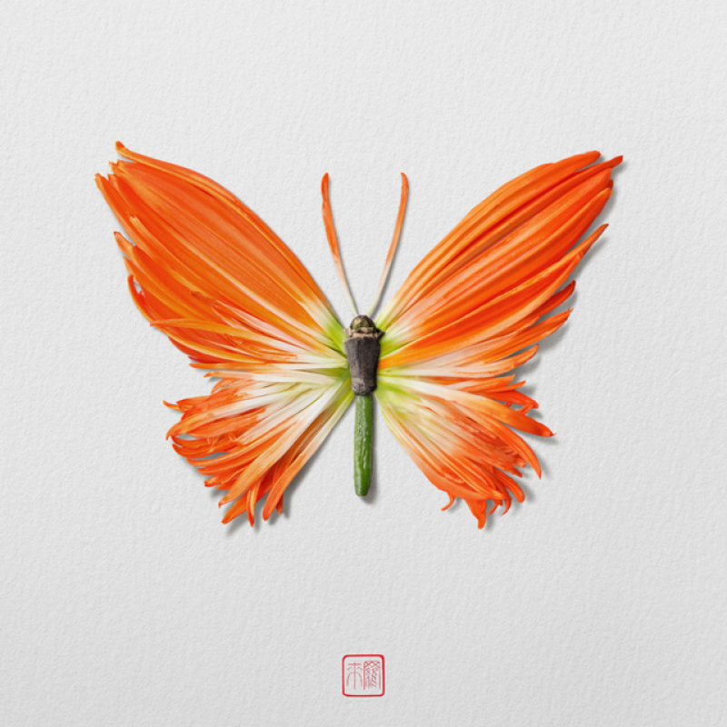raku-inoue-insectes-13