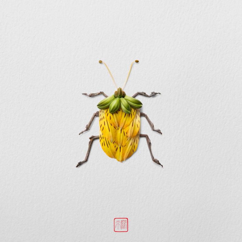 raku-inoue-insectes-14