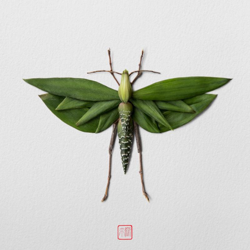 raku-inoue-insectes-15