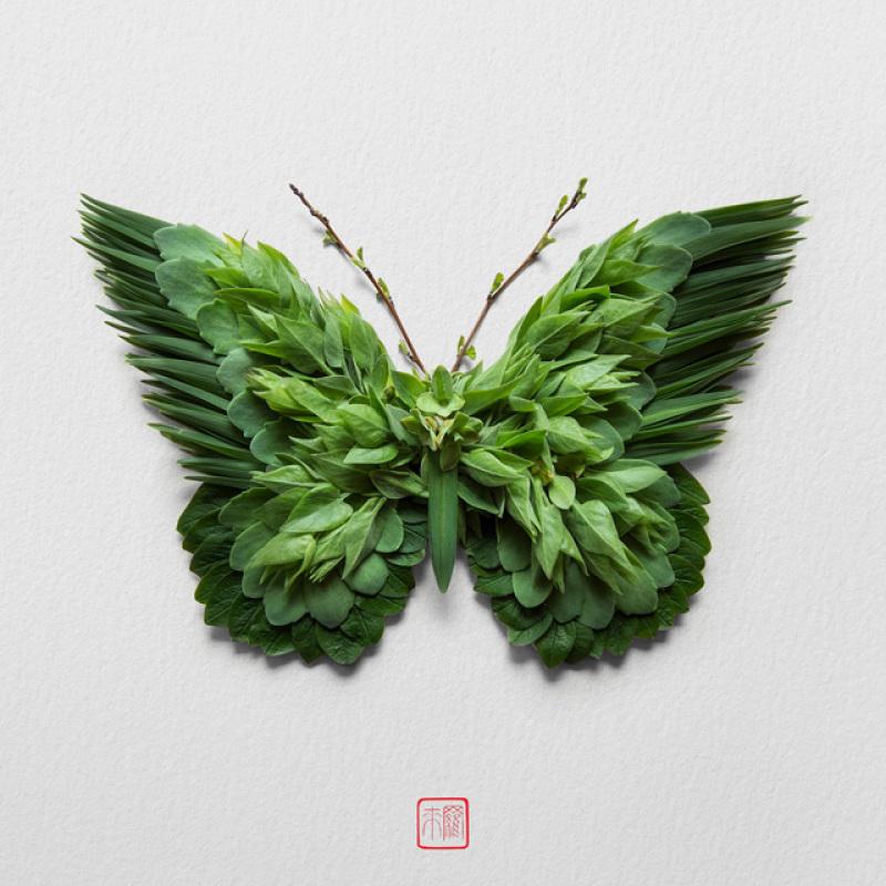 raku-inoue-insectes-16