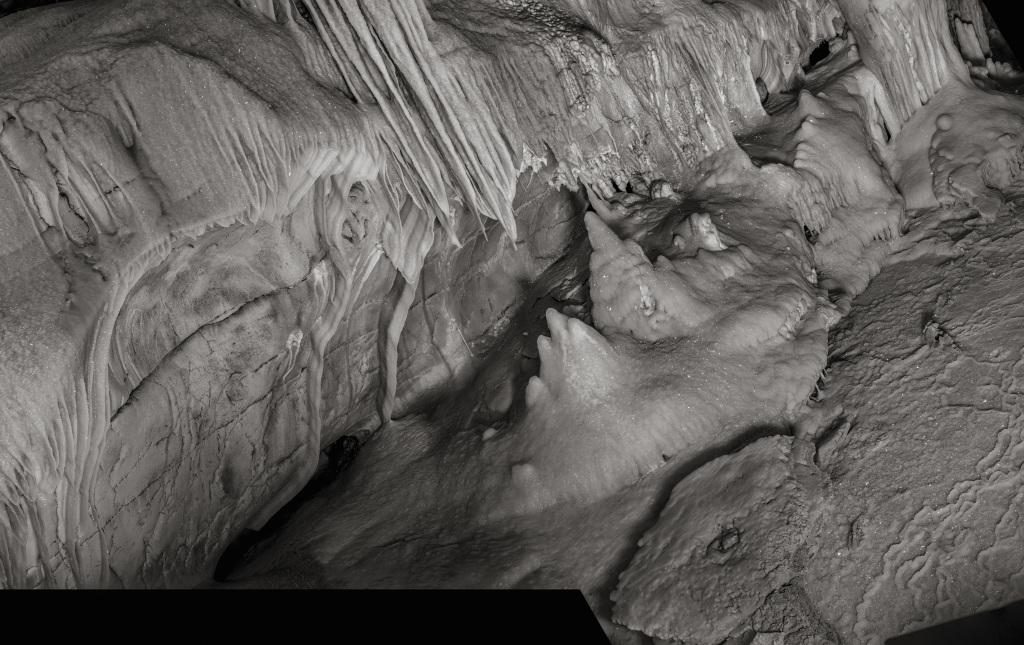 INSECTES-35 © Raphaël Dallaporta, Éditions Xavier Barral, 2016