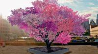 Il-a-cree-l-arbre-aux-40-fruits