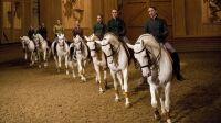 L-Academie-equestre-de-Versailles-recrute