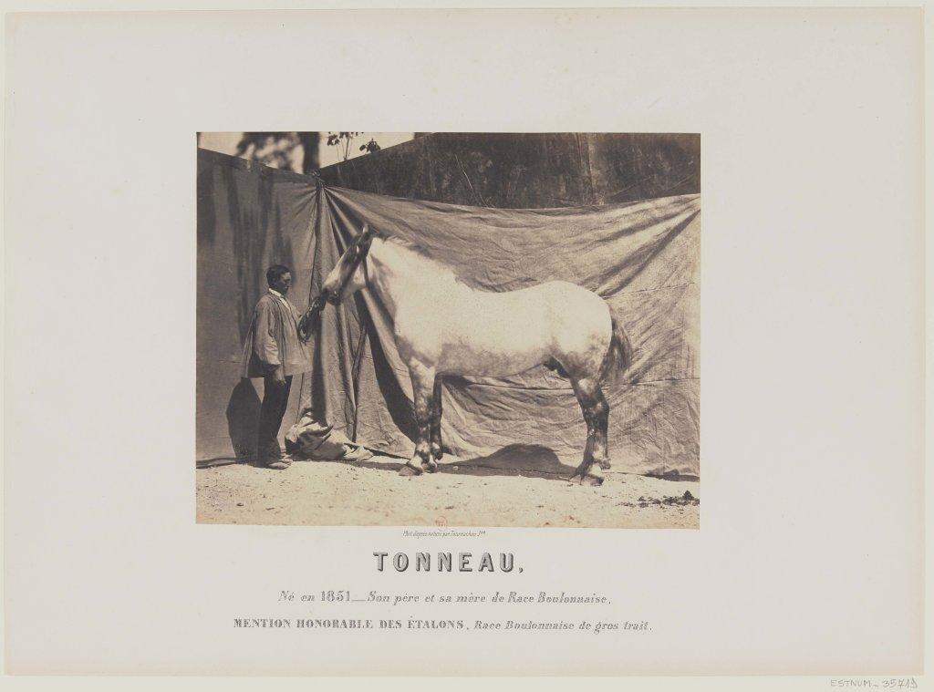 Adrien Tournachon, Etalon Tonneau, vers 1860