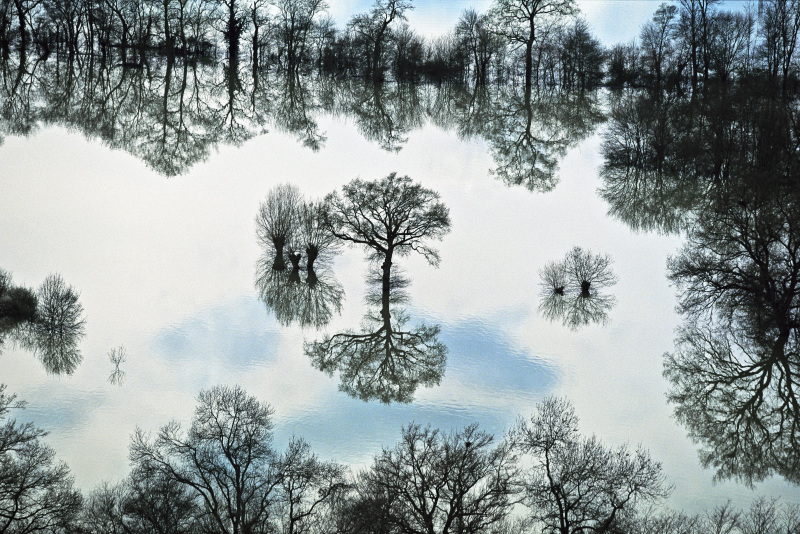 Trees in the middle of water near Taponas, Rhône, France (46°07' N – 04°45' W).