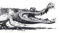 Franquin - Crocodile de Franquin