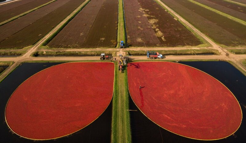 George Steinmetz, Big Food
