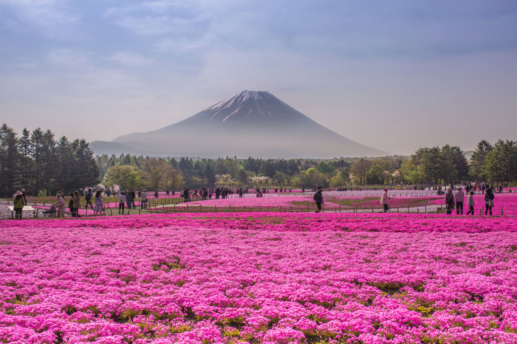Make up of Mt Fuji