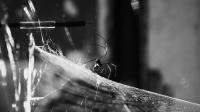 Arachnosophie ON AIR live with - Palais de Tokyo