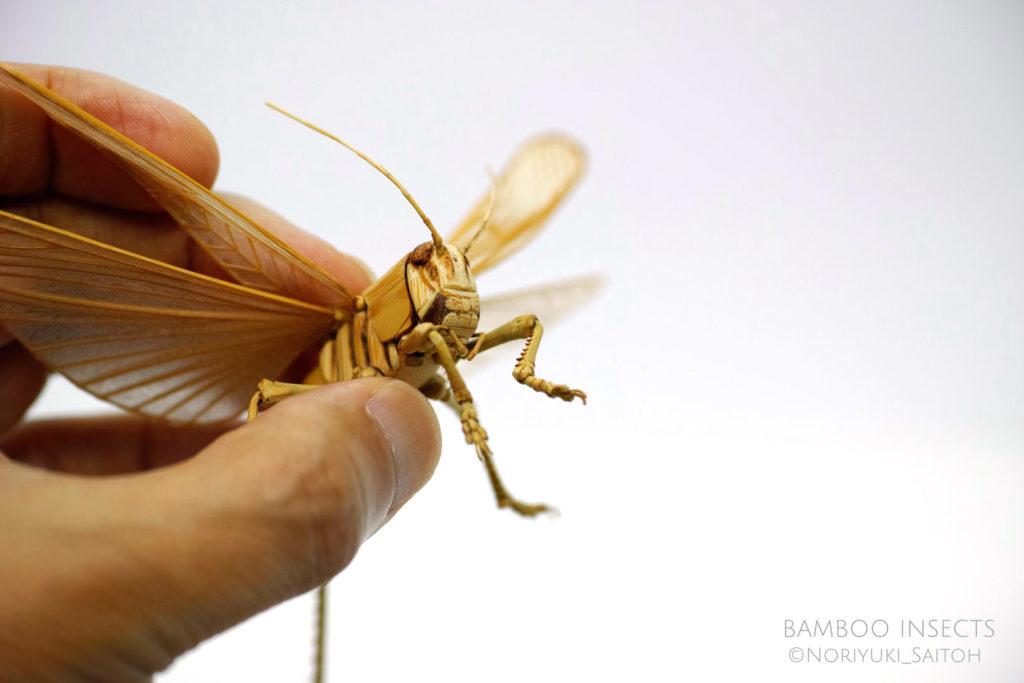 bamboo insects, (c) Noriyuki Saitoh, tous droits réservés