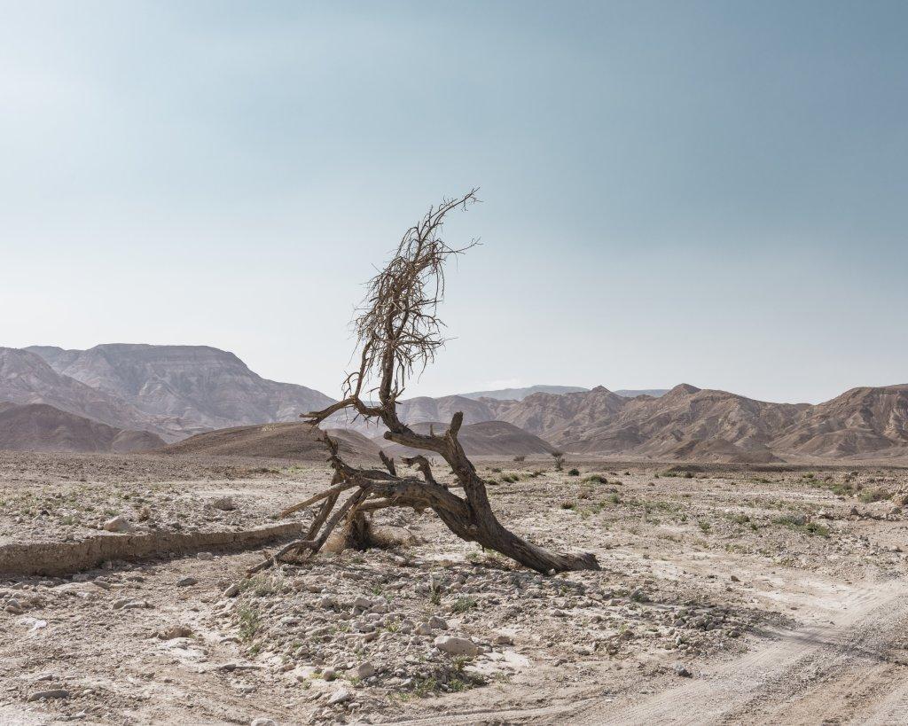 South Negev. Février 2016