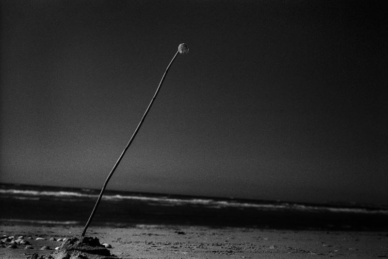 © Yusuf Sevincli