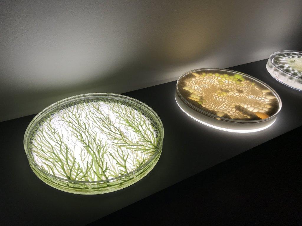 Vue de l'exposition Cycle Mutations Créations 3, La Fabrique du vivant, Erika Verzutti, Centre Pompidou, Paris (9)
