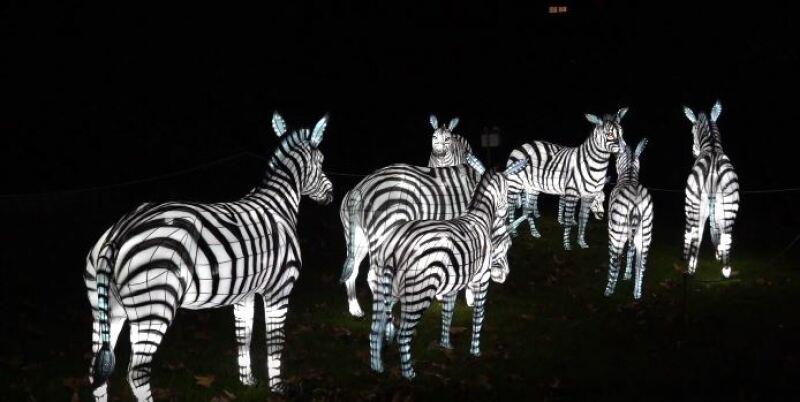 Especes En Voie D Illumination Au Jardin Des Plantes De Paris Arts