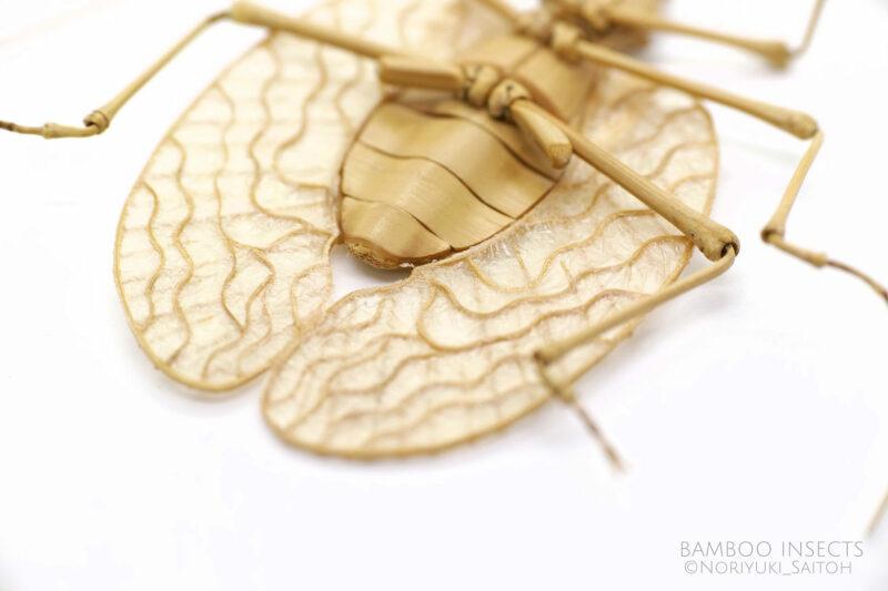 insecte en bambou, (c) Noriyuki Saitoh, tous droits réservés