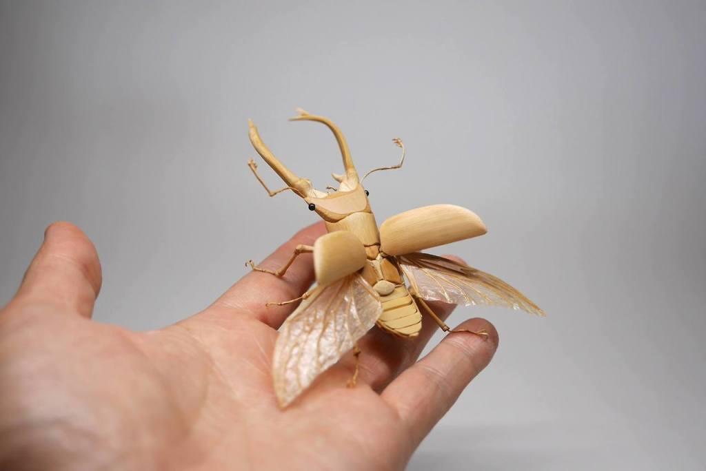 insectes, (c) Noriyuki Saitoh, tous droits réservés