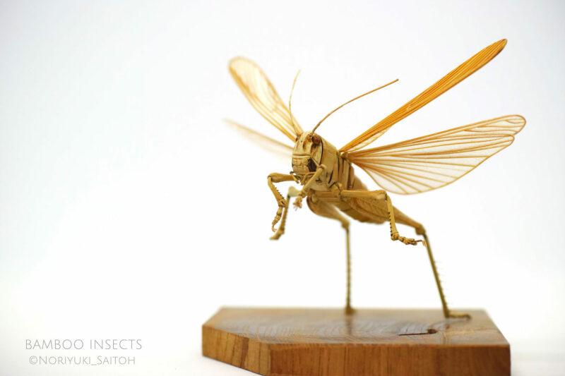insectes en bambou, (c) Noriyuki Saitoh, tous droits réservés