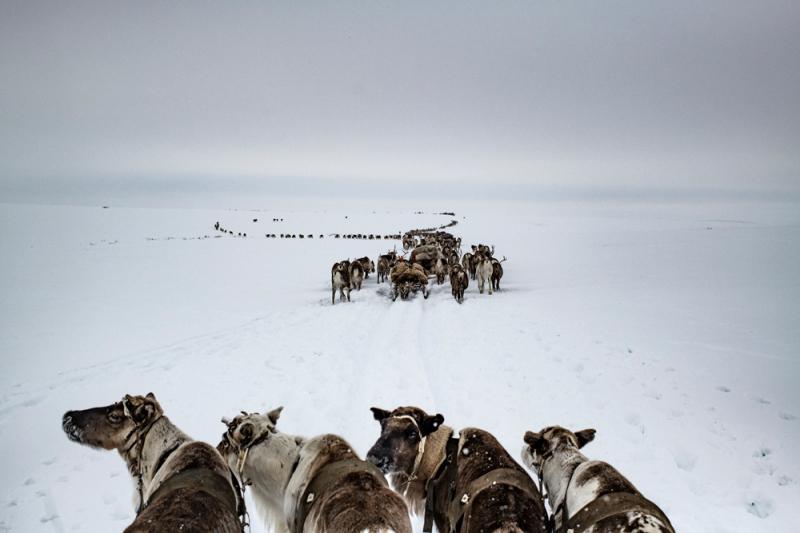 Le groupe Nenets, Péninsule de Yamal, avril 2018