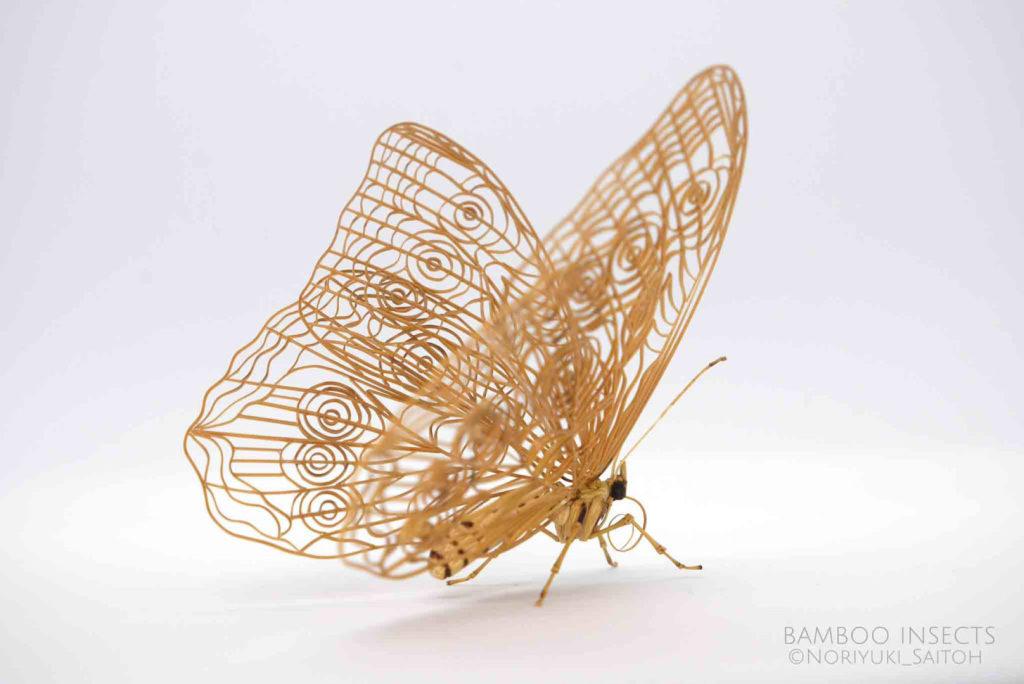 papillon, (c) Noriyuki Saitoh, tous droits réservés