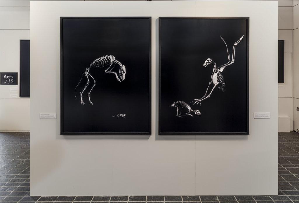 Vue de l'exposition Evolution - Musée départemental de la Préhistoire, Nemours