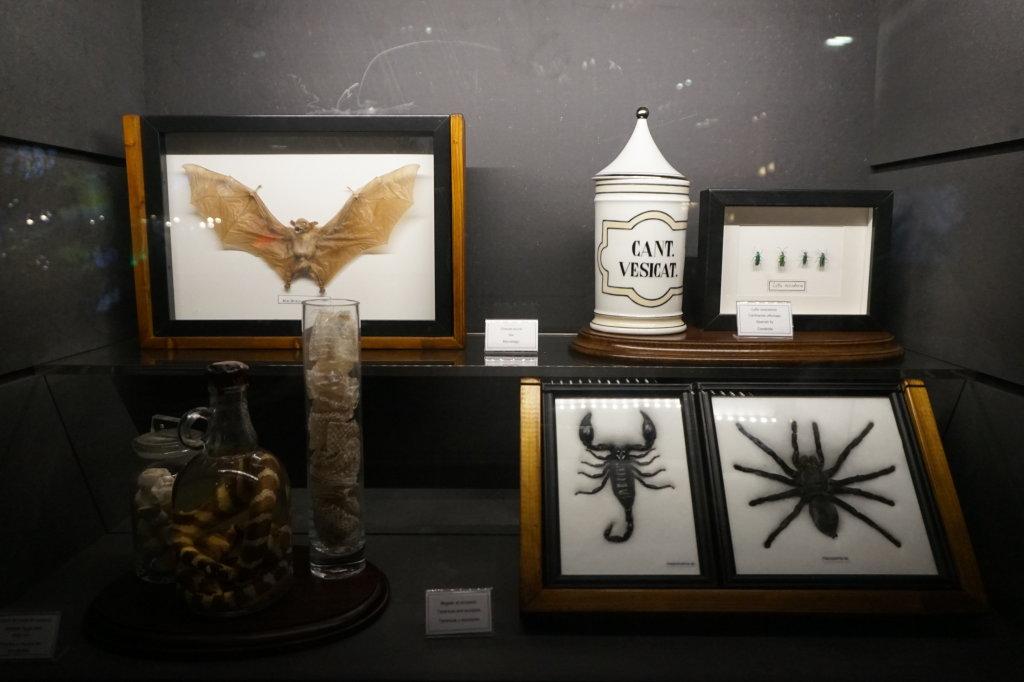 Vue de l'exposition Poison au Palais de la Découverte (34)
