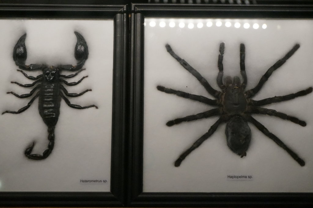 Vue de l'exposition Poison au Palais de la Découverte (35)