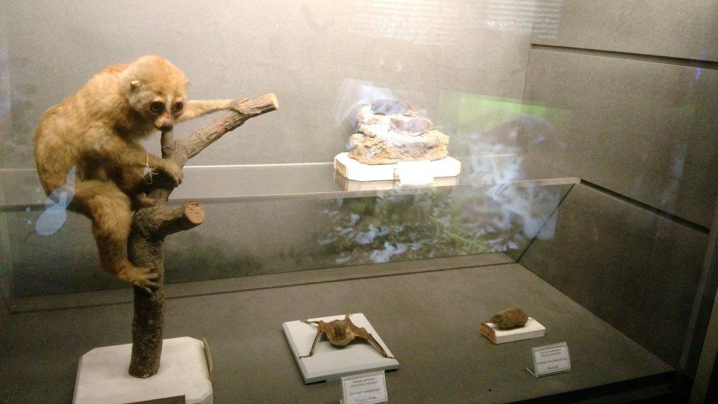 Vue de l'exposition Poison au Palais de la Découverte (65)