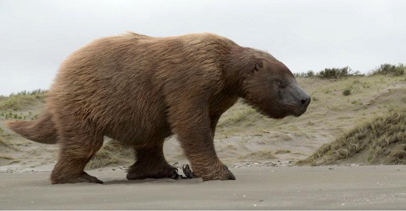 Megathere ou Paresseux géant
