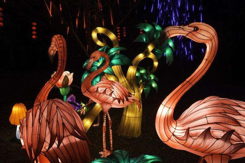 Visuel Festival des Lanternes 3