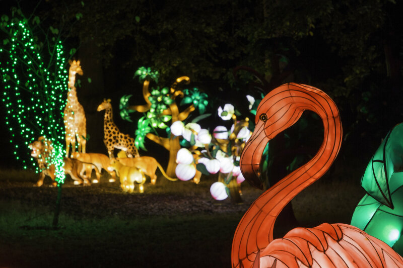 Visuel Festival des Lanternes 4