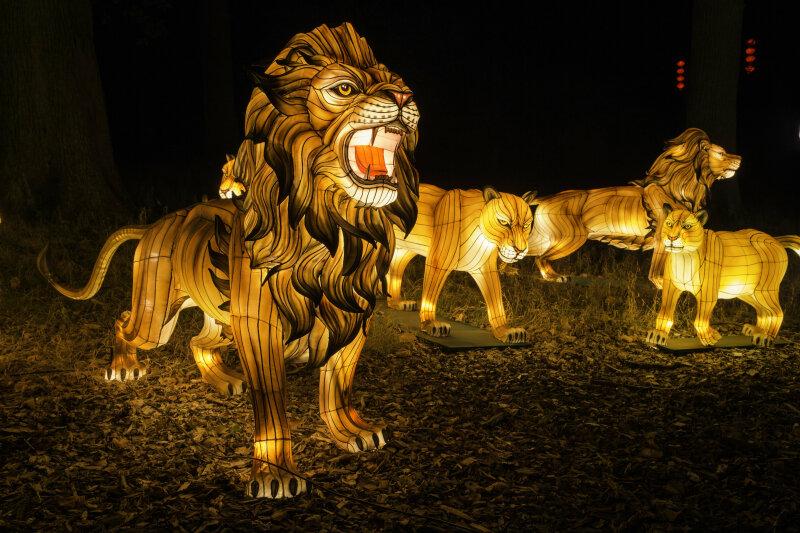 Visuel Festival des Lanternes 6