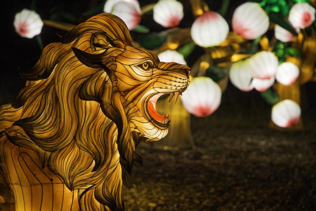 Visuel Festival des Lanternes 7