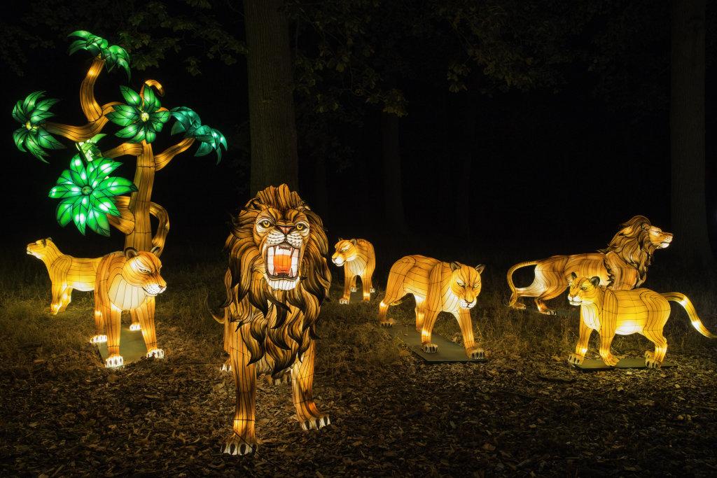 Visuel Festival des Lanternes 8