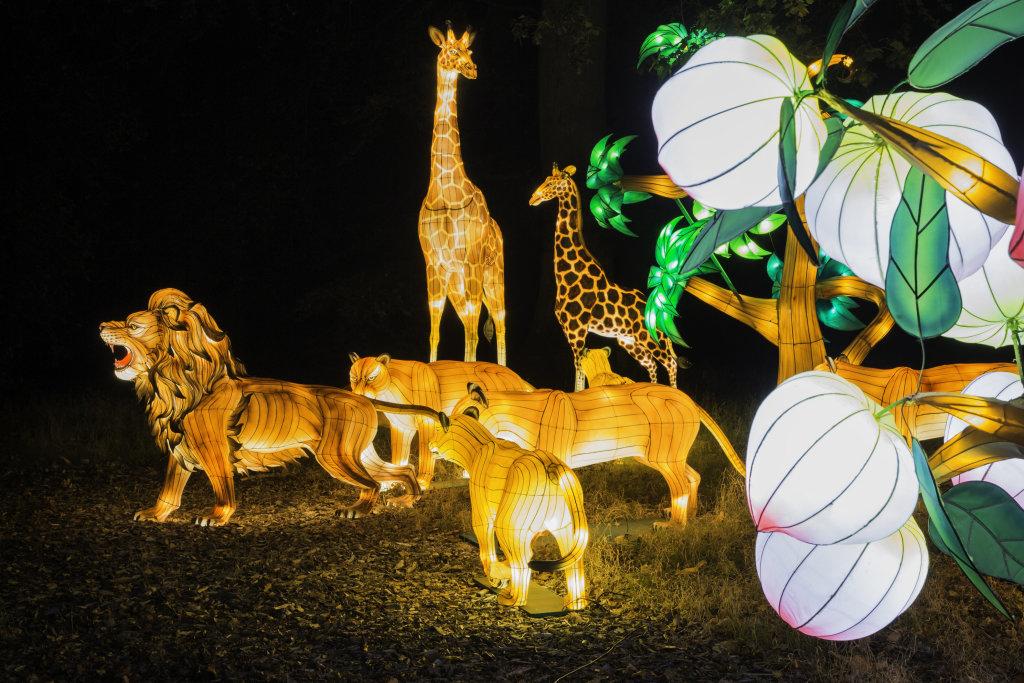 Visuel Festival des Lanternes 9