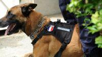 Lot-un-chien-de-la-gendarmerie-mord-un-enfant