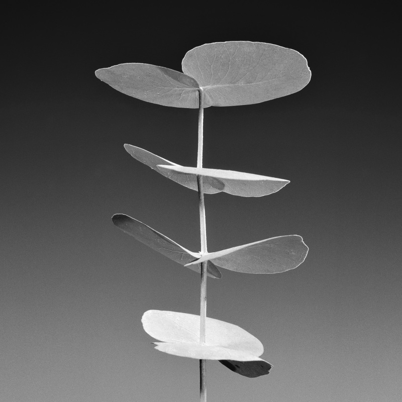 Jean-Baptiste Huynh, Eucalyptus, 1997