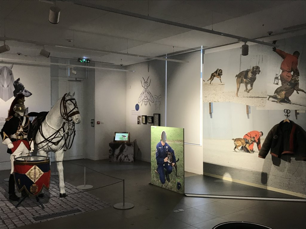 Vue de l'exposition Des animaux et des gendarmes, Musée de la Gnedarmerie nationale, Melun, IDF (18)