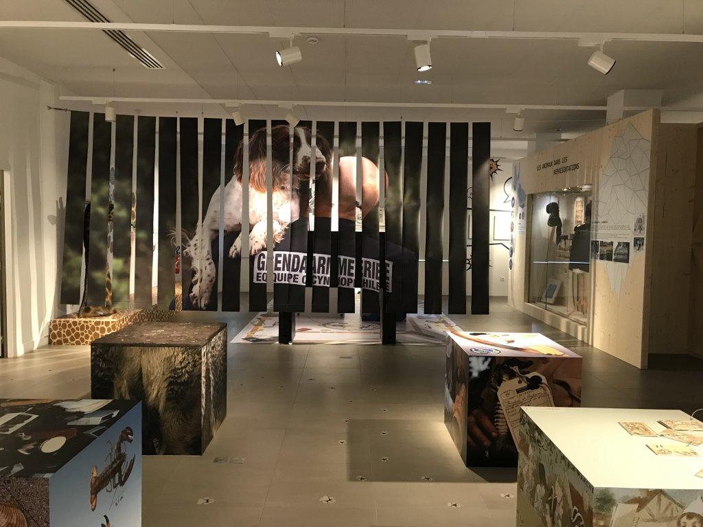Vue de l'exposition Des animaux et des gendarmes, Musée de la Gnedarmerie nationale, Melun, IDF (19)