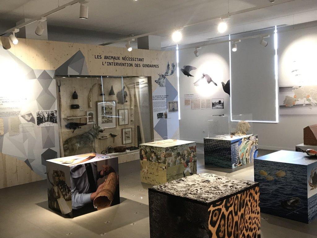 Vue de l'exposition Des animaux et des gendarmes, Musée de la Gnedarmerie nationale, Melun, IDF (26)