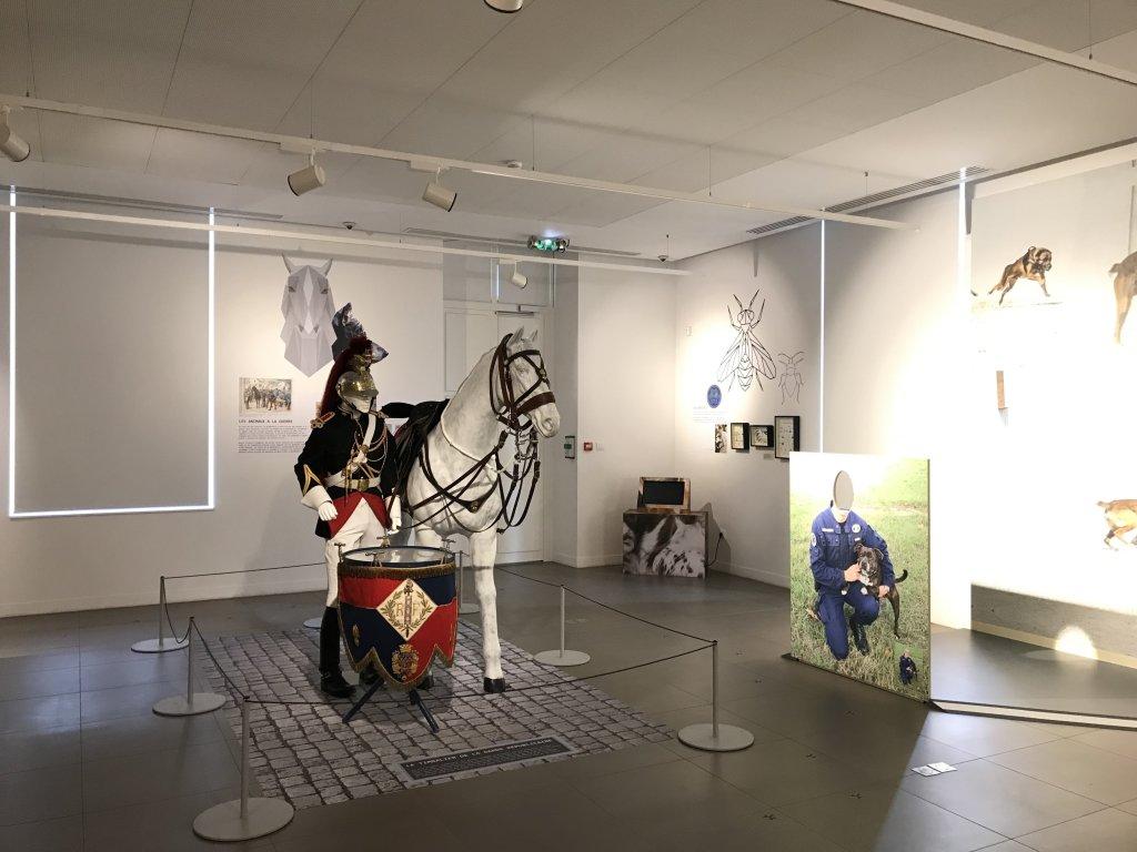 Vue de l'exposition Des animaux et des gendarmes, Musée de la Gnedarmerie nationale, Melun, IDF (27)